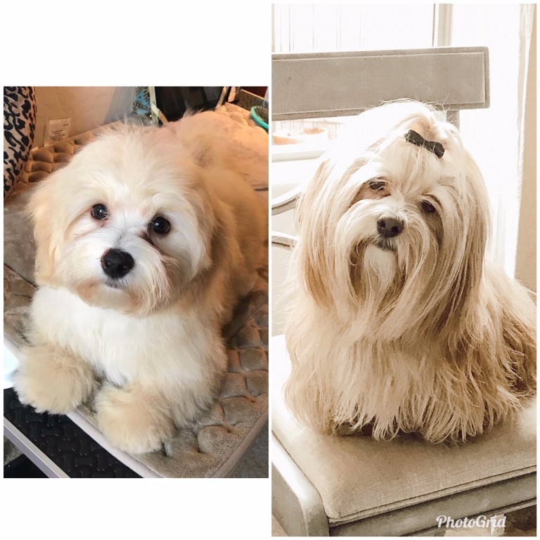 I started to groom Jimmy at 10 weeks old. He knows that brushing is just a part of life!