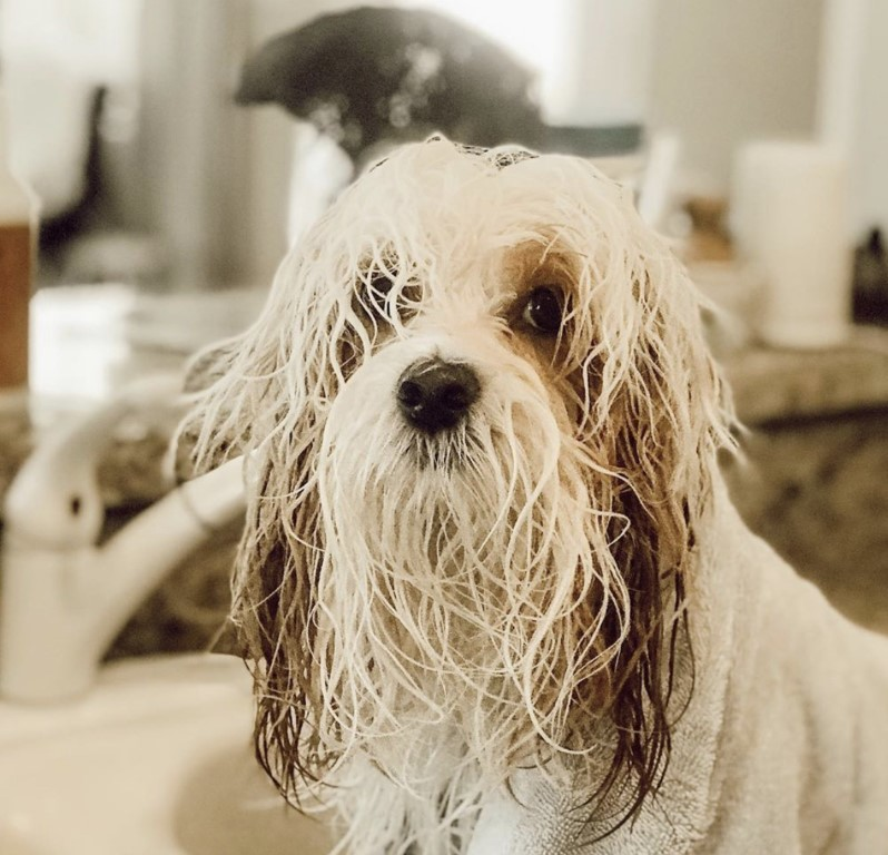 Bathing dogs can be back breaking if you don't have the proper equipment. I will tell you next week how to bathe your dog like the pros do.