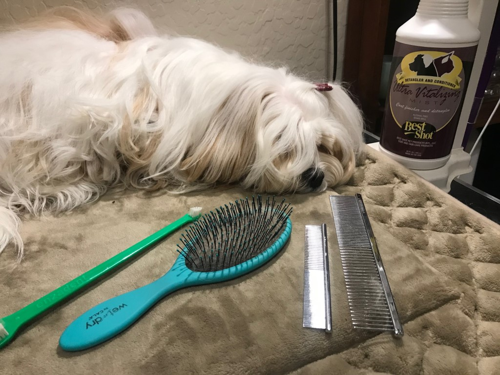 What you'll need to groom your dog. Brush, comb, toothbrush..and a dog! :)