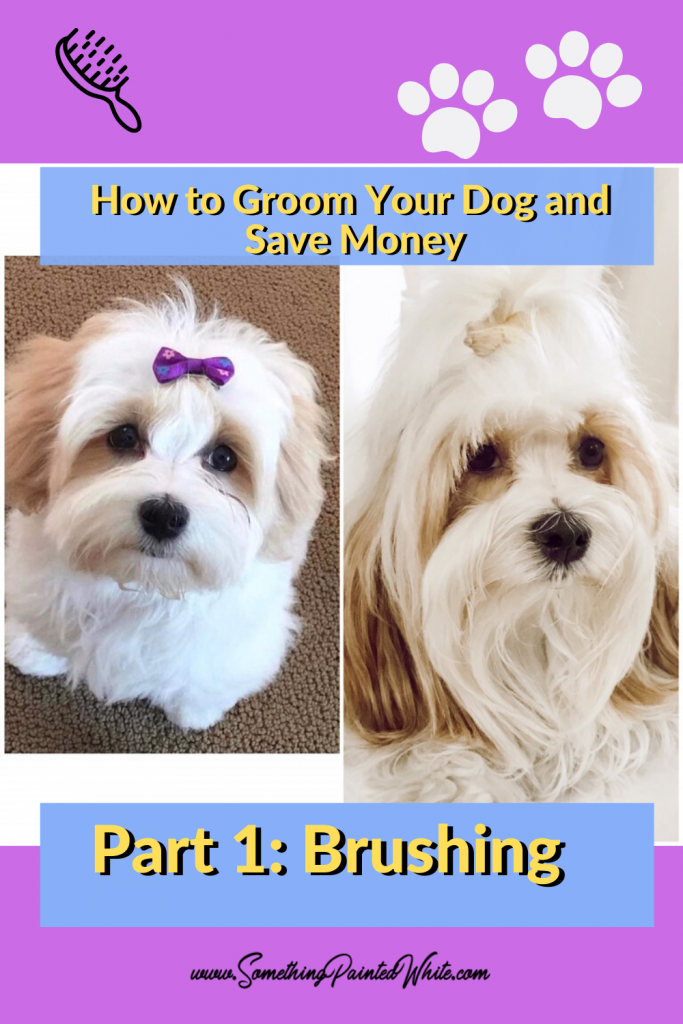 How to Groom your dog, a tutorial about brushing!