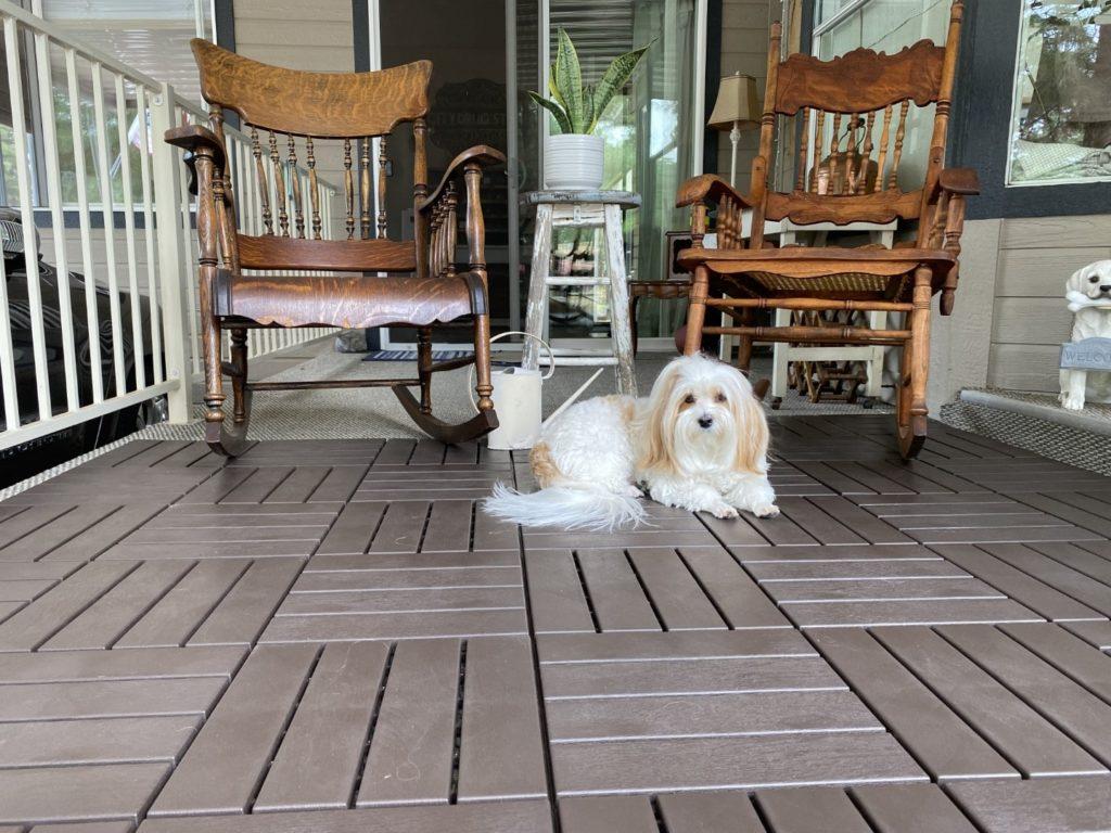Greta, a havanese dog, enjoying the deck tile laid in a parquet pattern